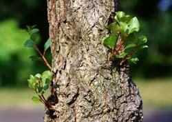 Духи древесного семейства