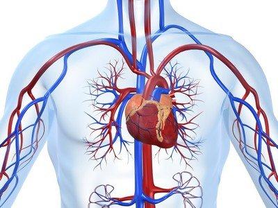 ИБС - аббревиатура ишемической болезни сердца