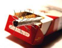 Курить или парить?