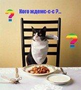 Питание кошек в домашних условиях
