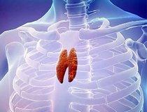 Органы иммунной системы: Вилочковая железа