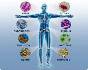 От чего зависит иммунитет