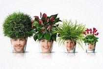 Польза комнатных растений для людей
