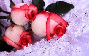Символизм розовых роз