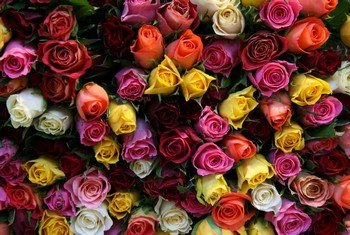 Символ цвета роз