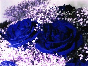 Символизм синей розы