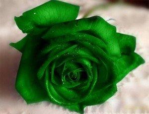 Символизм зеленых роз