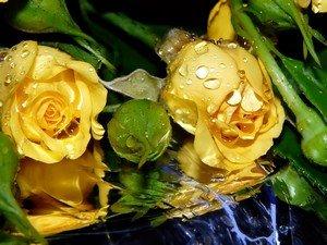 Символизм желтых роз
