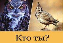 Кем лучше быть совой или жаворонком?
