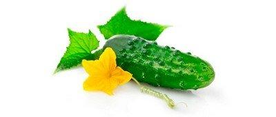 Огурец - зеленое лекарство