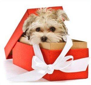 Стоит ли дарить «живой» подарок