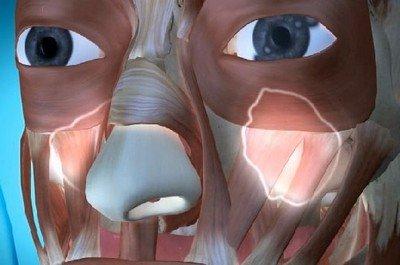 Гайморовы пазухи изображены подсвечиванием