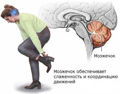 Мозжечок отвечает за слаженность и координацию движений