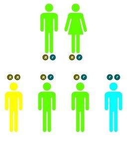 Наследование синдрома Пендреда по аутосомно-рецессивному типу