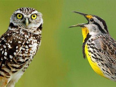 Психотипы: «сова» и «жаворонок»
