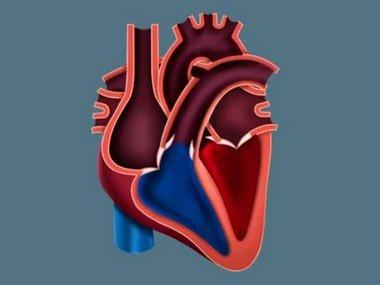 В простой форме мы расскажем о физиологии сердечных сокращений