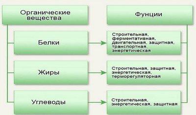 Макронутриенты и их функции