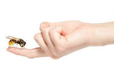 Что делать при укусе насекомого?