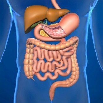 Классификация кист брыжейки кишечника по локализации
