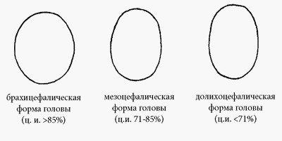 Частота встречаемости брахи-, мезо- и долихоцефалий