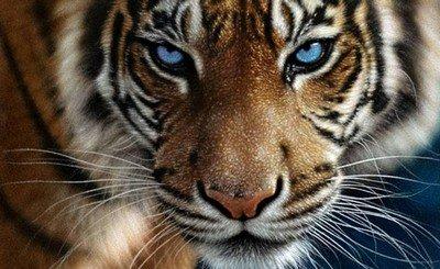 Кто на свете из животных всех сильнее?