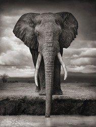 Сила слона