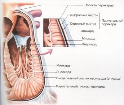 Клиника миокардиодистрофии