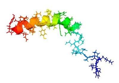 Нейропептид-Y - надежда на исцеление всего человечества от ожирения