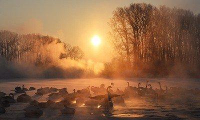Незамерзающее «Лебединое озеро»