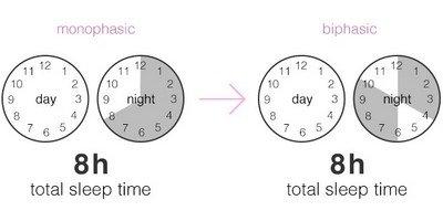 Виды сна: моно- и бифазный сон