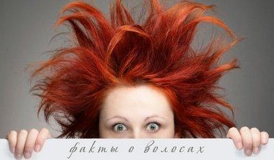 Факты и вымыслы о волосах