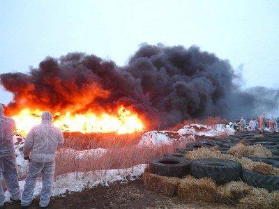 Дезинфекция огнем и бучением - физические способы обеззараживания