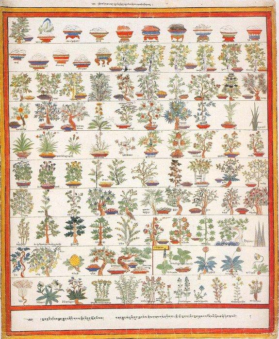 Лекарственные травы, используемые в монгольской нетрадиционной медицине