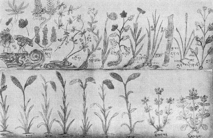 Лекарственные растения, применяемые в тибетской медицине