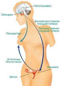 Механизм развития аменореи при поражении гипофиза