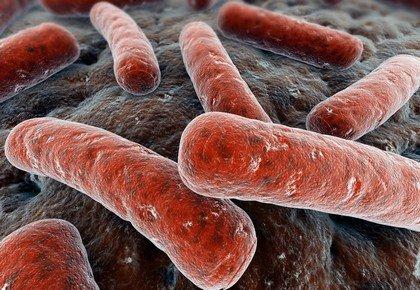 Туберкулезная палочка (Коха) - причина генитального туберкулеза