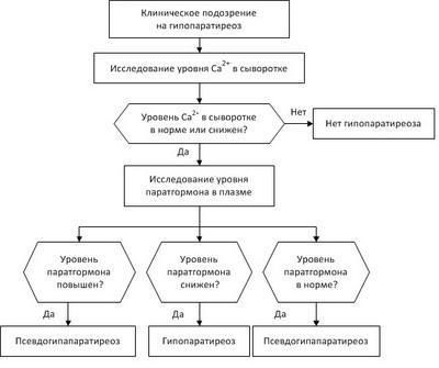 Схема алгоритма диагностики гипопаратиреоза
