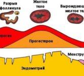 Биологические свойства прогестерона