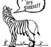 Снятие стресса методами восточной медицины